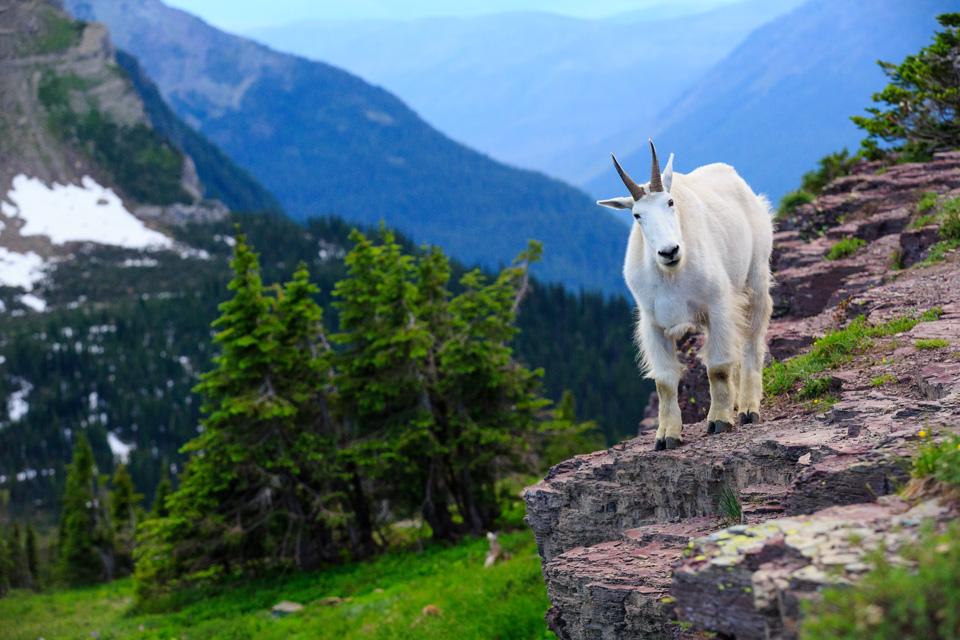 Glacier National Park Photo Workshop | Jason Savage Photography