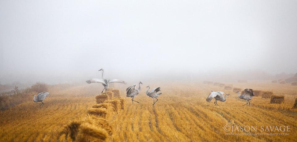 Montana Cranes