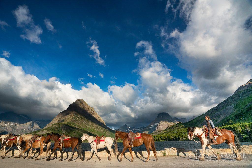 Horses Montana