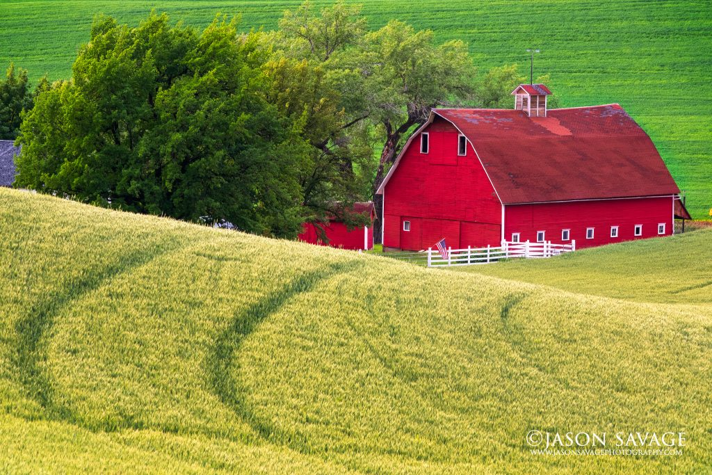Wheat and Barn