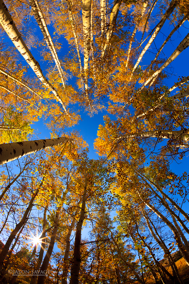 Montana Aspens Photography