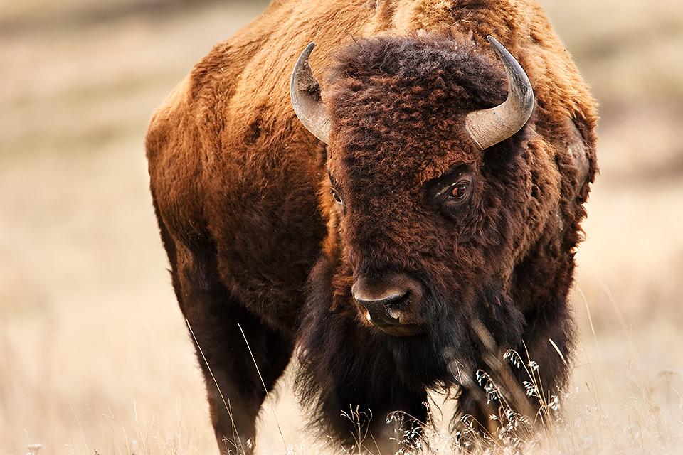 Montanan Wildlife