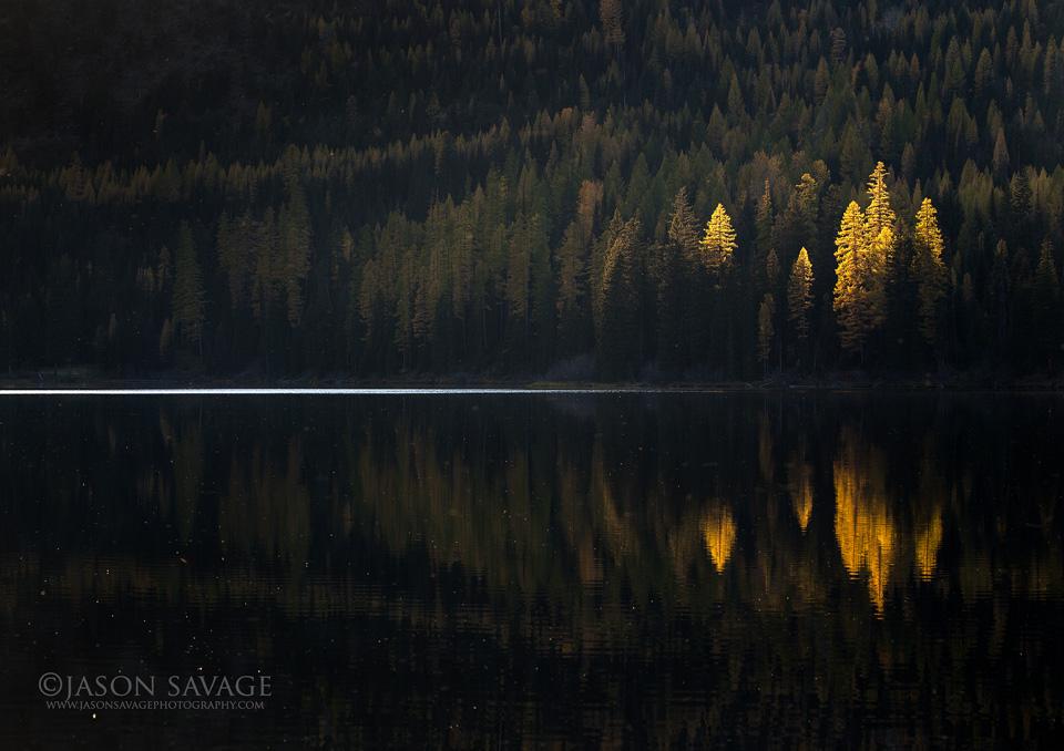 Fall Montana Tamaracks