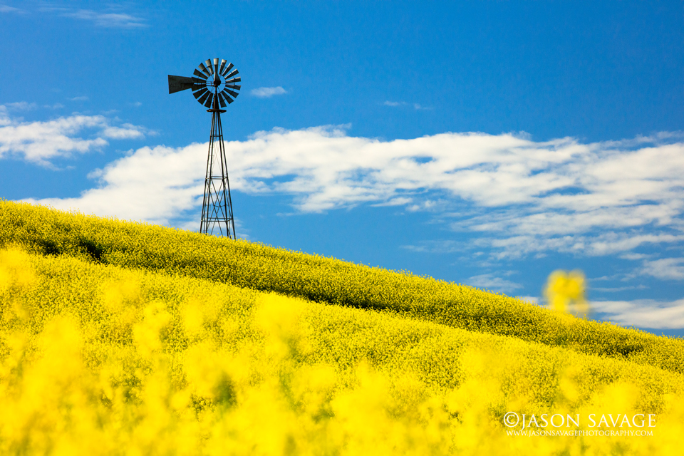 Windmill Palouse