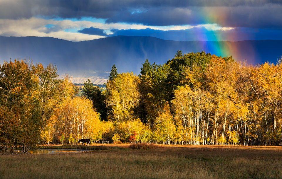 Fall Colors Montana